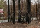 ワーキング・ホリデーで 森林火災の被災地を支援しよう!