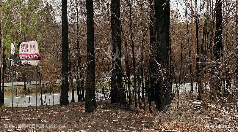 森林火災で被害を受けたペットホテル