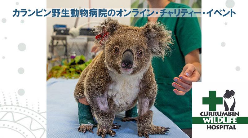 カランビン野生動物病院のオンライン・チャリティー・イベント