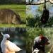 オーストラリアの固有種と生物多様性 ~オーストラリアの動物達
